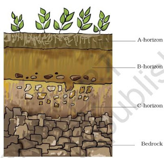 NCERT Solutions for Class 7th: Ch 9 Soil Science - Study Rankers
