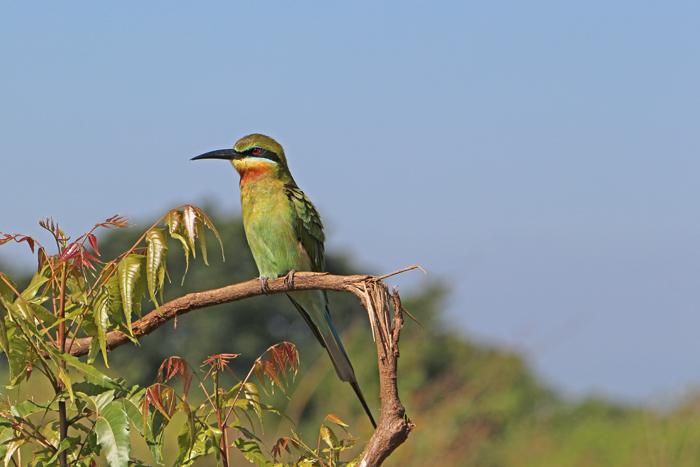 Spint im Udawalawe Nationalpark