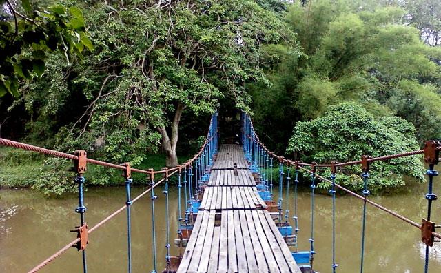 Taman Hutan Punti Kayu