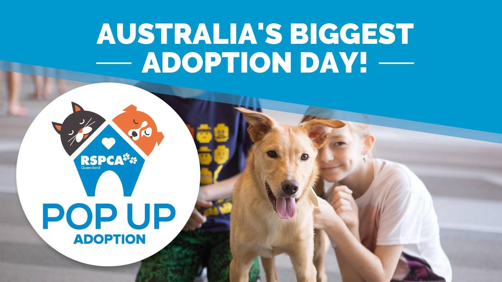 Pet Shelters Pop Up : Australian dog lover