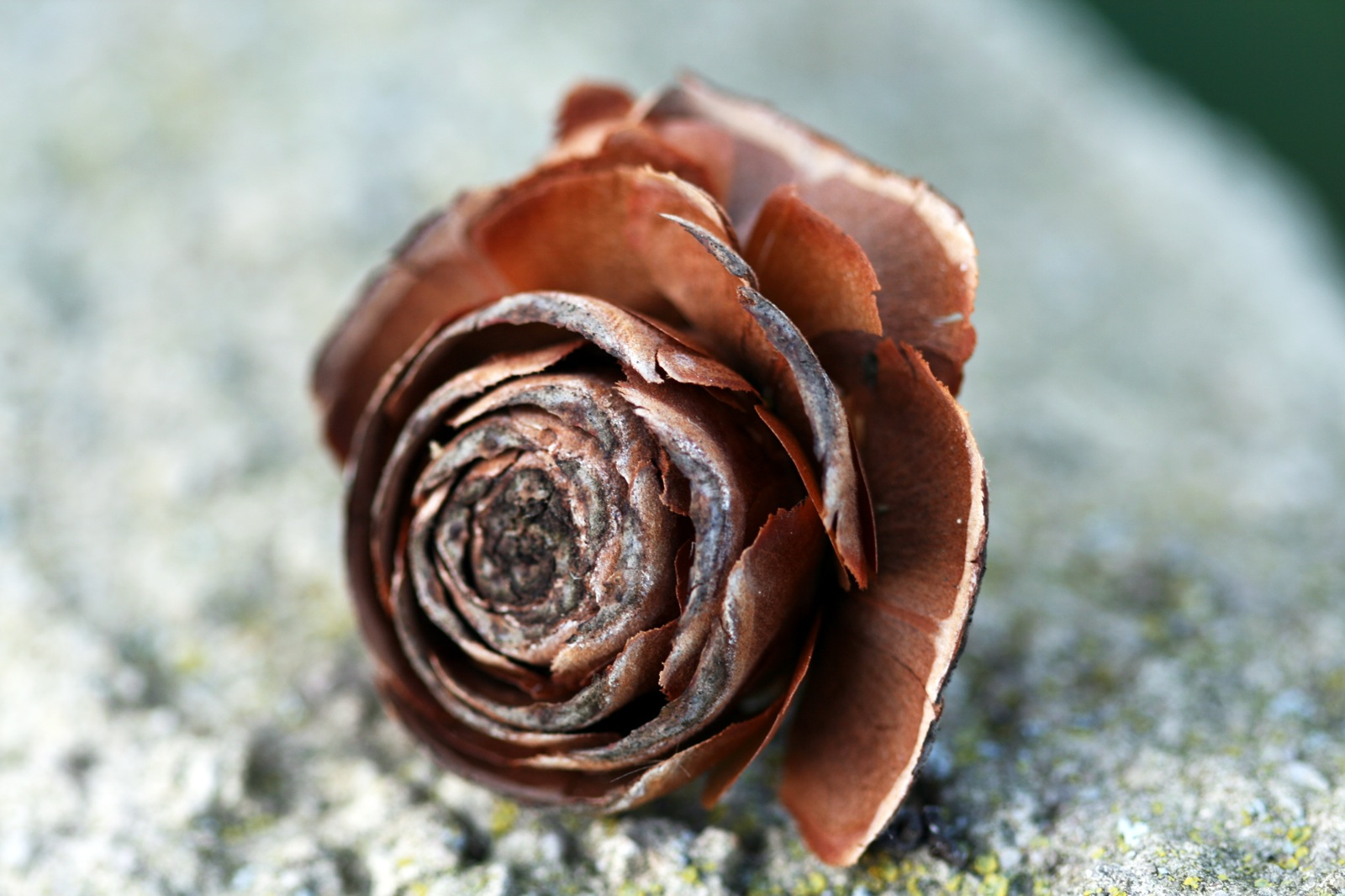 online roses