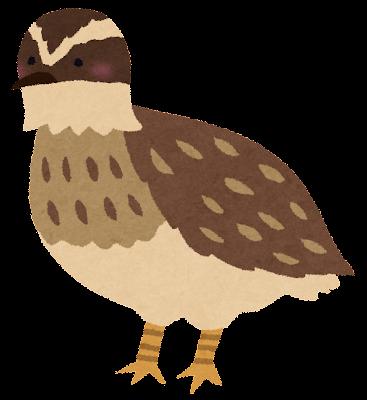 ウズラのイラスト(鳥)