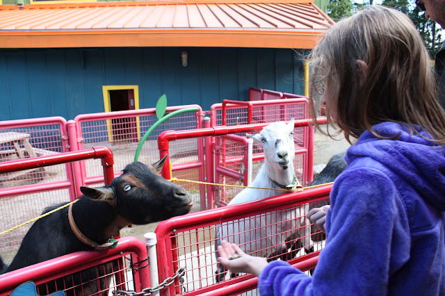 Child feeding goats at Point Defiance Zoo