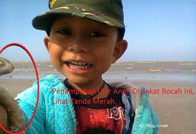 Fenomena Ular Aneh Yang Tertangkap Kamera Di Pantai Mangrove Center Tuban