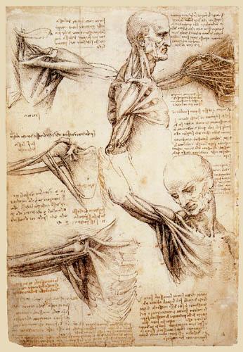 Cual es la Definición de Fisiología y Anatomía del cuerpo humano ...