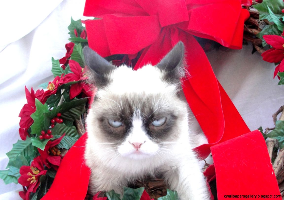 grumpy cat christmas hat wallpapers gallery. Black Bedroom Furniture Sets. Home Design Ideas