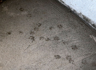 Puppy footprints in the concrete floor in the bathroom