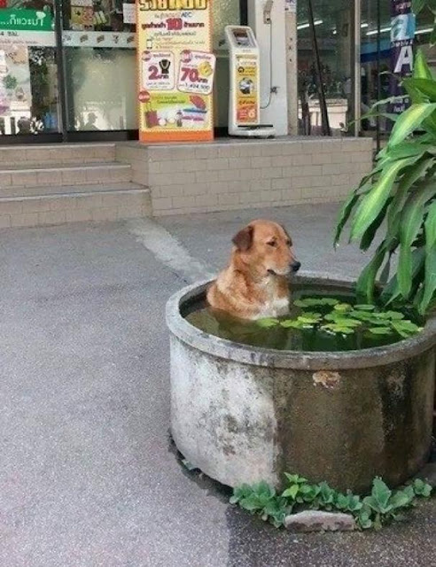 """18 chú chó đã """"ẩm IC"""" lại còn uống nhầm thuốc lú"""