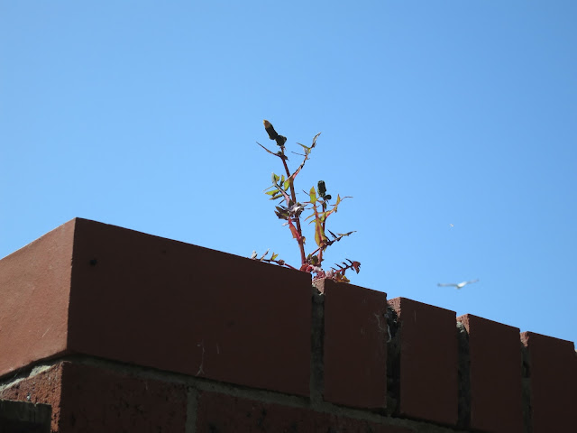 Plant on top of wall with gull flying beyond.
