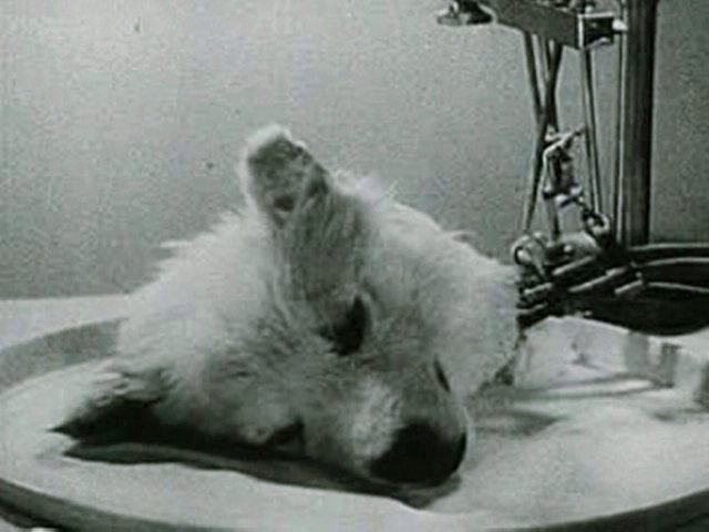 disturbing-creepiest-science-experiments-dog-head-alive
