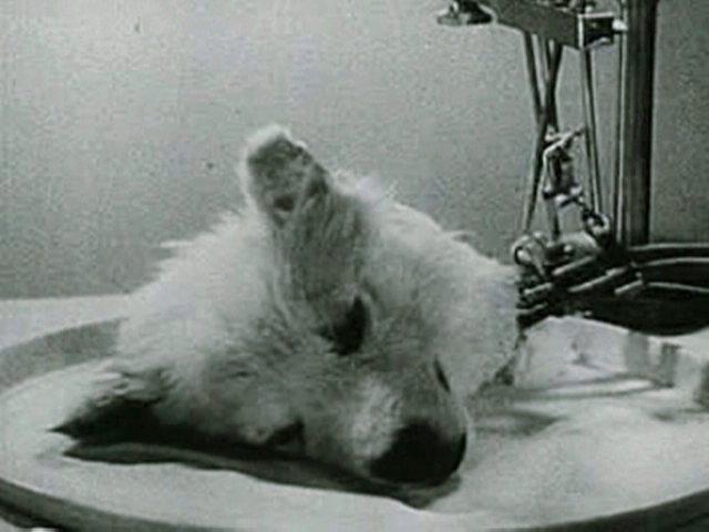 Expériences scientifiques les plus effrayantes et inquiétantes-tête-de-chien-vivante