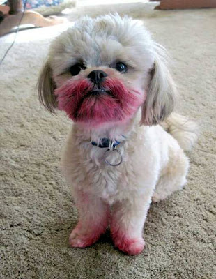 Puppy says, NO, I HAVEN'T SEEN YOUR LIPSTICK!