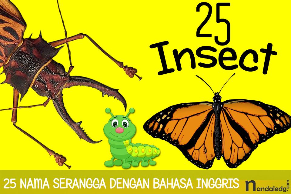 25 nama serangga dalam bahasa inggris