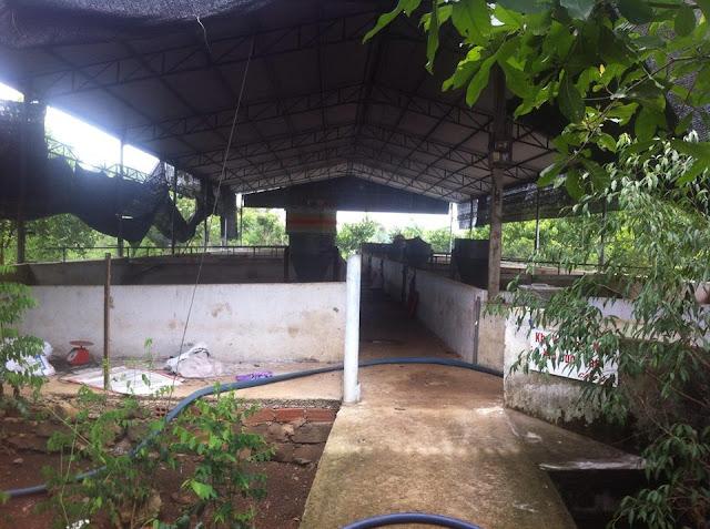 Bán đất vườn trái cây chính chủ tại Phường Bảo Vinh, thị xã Long Khánh 03