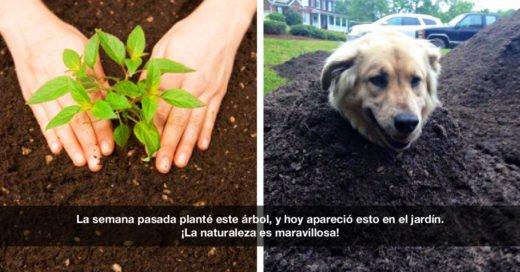 19 Memes de perros con los que no podrás ¡dejar de reír!