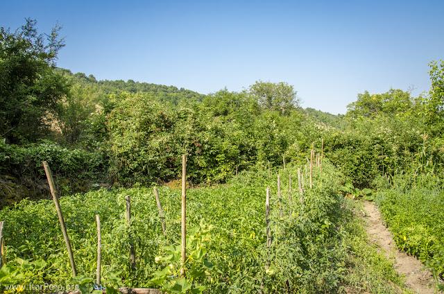 Garden in Gradeshnica village in Mariovo