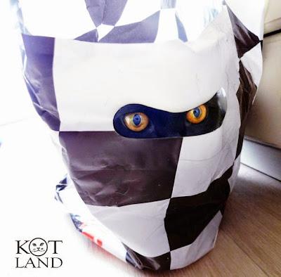 gato escondido en bolsa