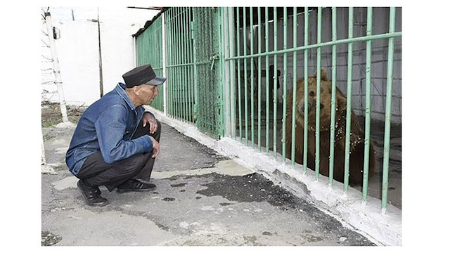 Lakukan Kesalahan, Beruang Ini Dipenjara Bersama Para Penjahat Berbahaya