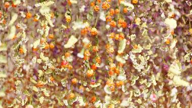 'Le Jardin Préservé', las flores de Rebecca Louise-Law en los Establos de Chaumont-sur-Loire