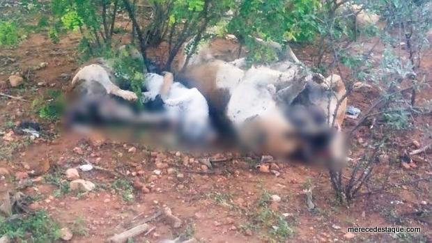 Vários cães e gatos são encontrados mortos com sinais de envenenamento em Jataúba