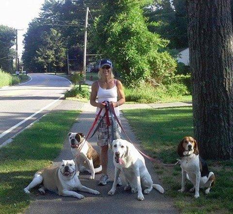 Dog Training Dover Nh
