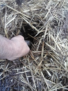 deschiderea gropilor la plantare cu sadilul de lemn