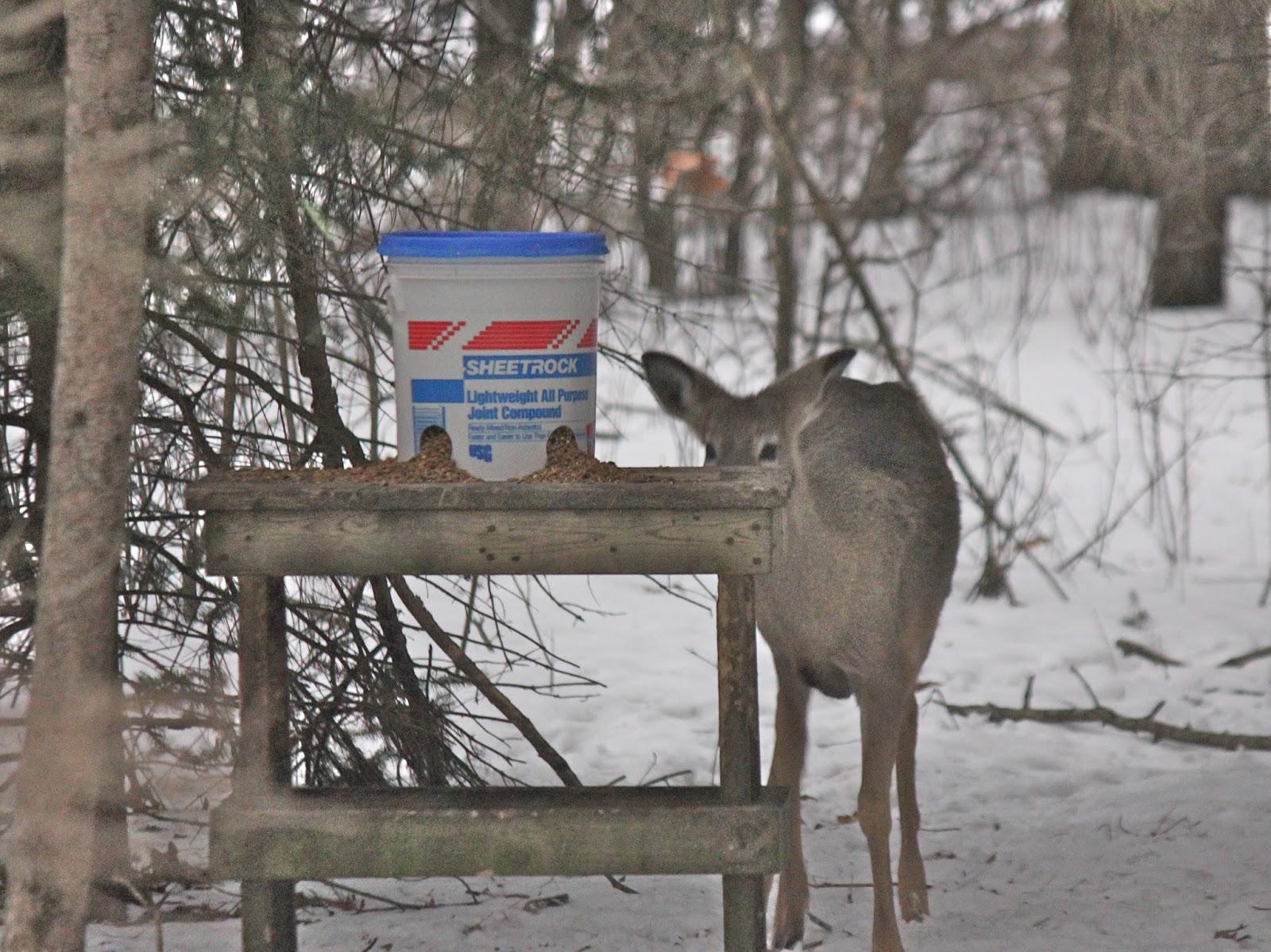 feeders deer bucket homemade feeder