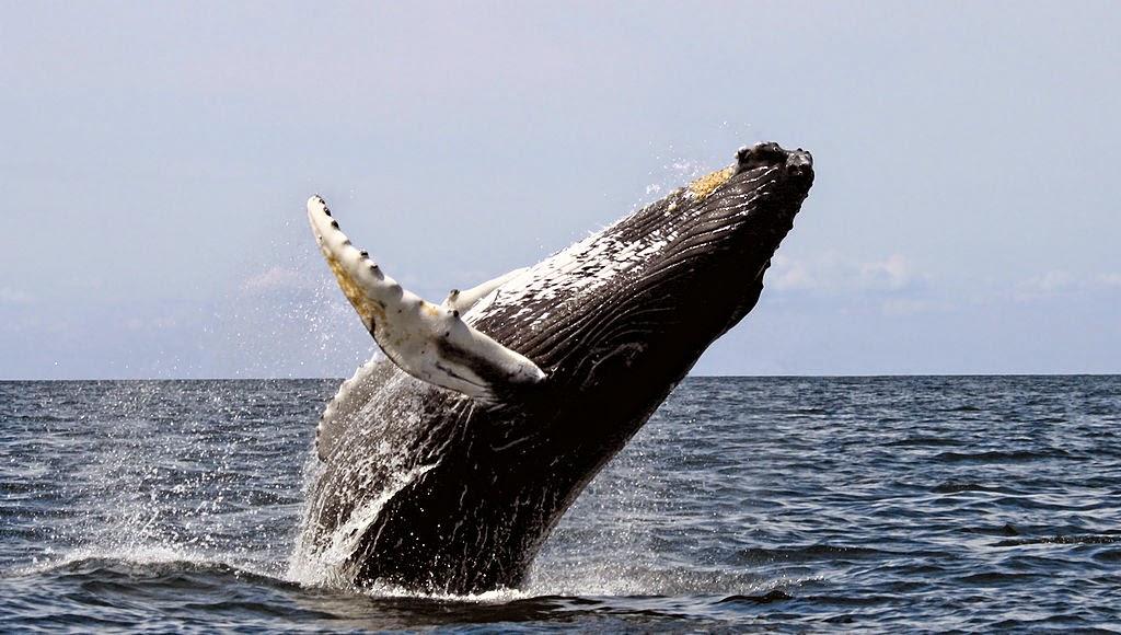 jungle: adorable sea creature