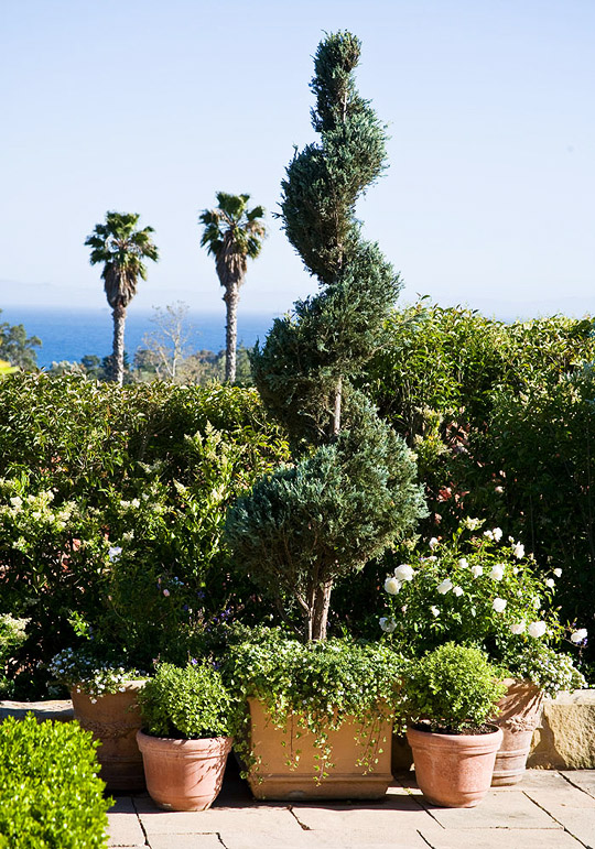 Un jard n rom ntico guia de jardin for Arboles para macetas de exterior