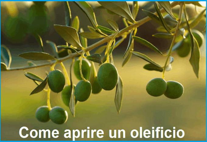 Come aprire un oleificio: quanto costa e consigli utili