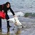 Esta mujer arrastra  a un cisne fuera del lago para hacerse un selfie. El resultado es terrorífico