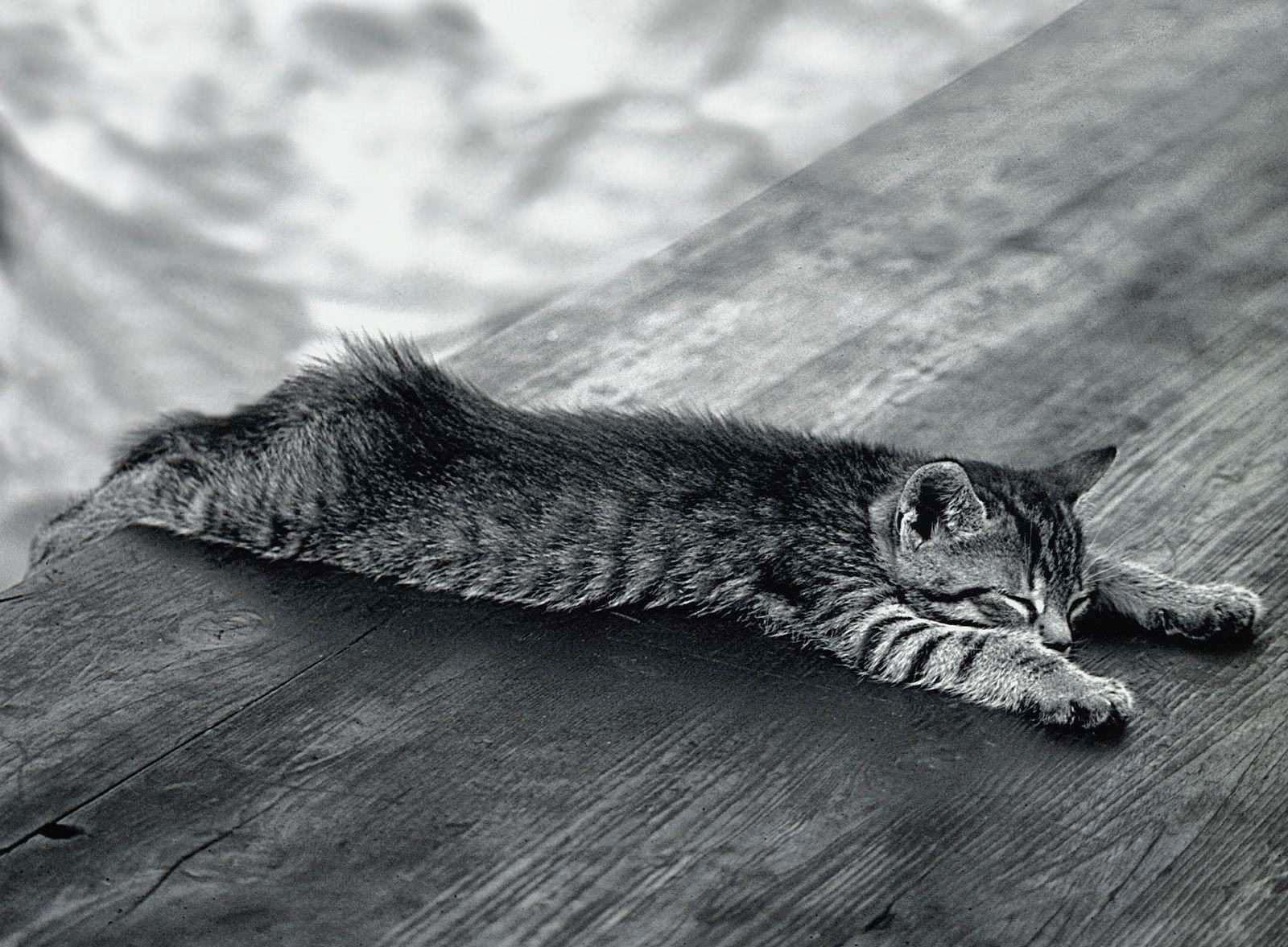 Zwart wit foto met kat op bankje