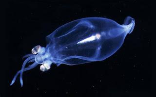 Animales marinos transparentes