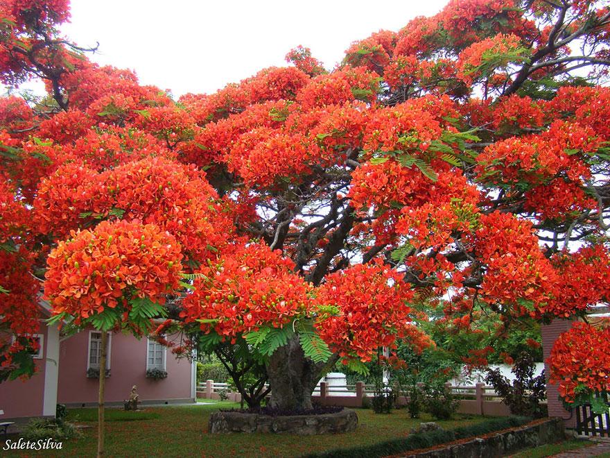 Kết quả hình ảnh cho pohon terindah di dunia