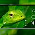 Say Yes! Inilah Harga Pre-order Nokia 6.1 Plus di Indonesia