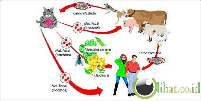 5 Jenis Penyakit yang Bersumber dari Hewan Peliharaan selain Rabies