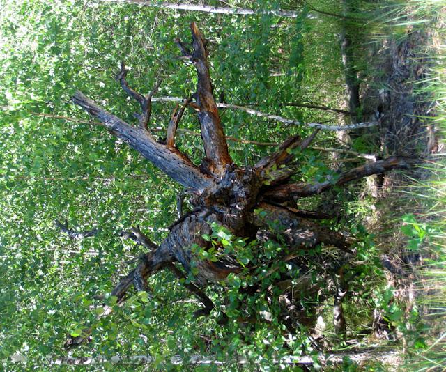 Фото Виталия Бабенко: поваленные деревья