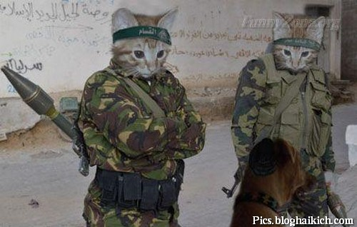 Hài hước với ảnh động vật trong quân đội