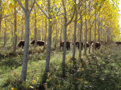 método ecológico para la producción animal