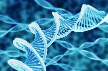 SE DNA É SOFTWARE, QUEM ESCREVEU O CÓDIGO?
