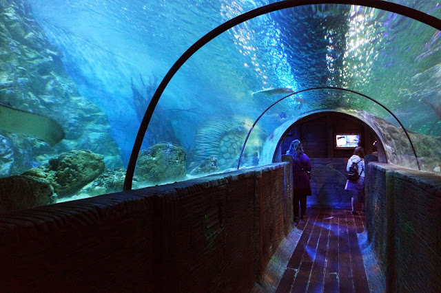 underwater tunnel at sea life aquarium