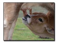 Resultado de imagen de lactancia mamiferos