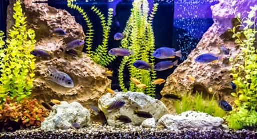 Oświetlenie w akwarium