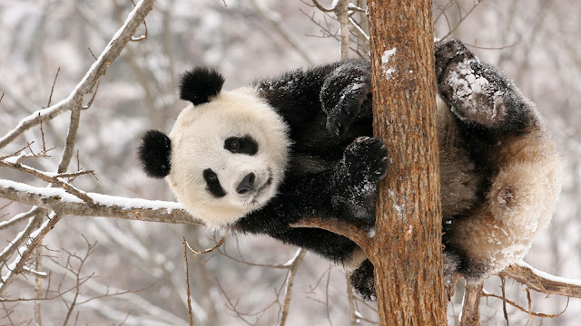 Cute Animals HD Wallpapers