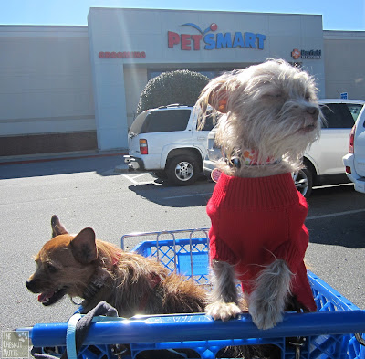 Jada and Bailey in front of PetSmart