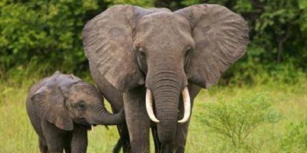 Pusat Latihan Gajah pusat latihan gajah saree pusat latihan gajah minas pusat latihan gajah riau pusat latihan gajah seblat