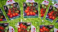 Benih, tomat, tahan virus,kuning, keriting, unggul, dataran rendah, tinggi, petani