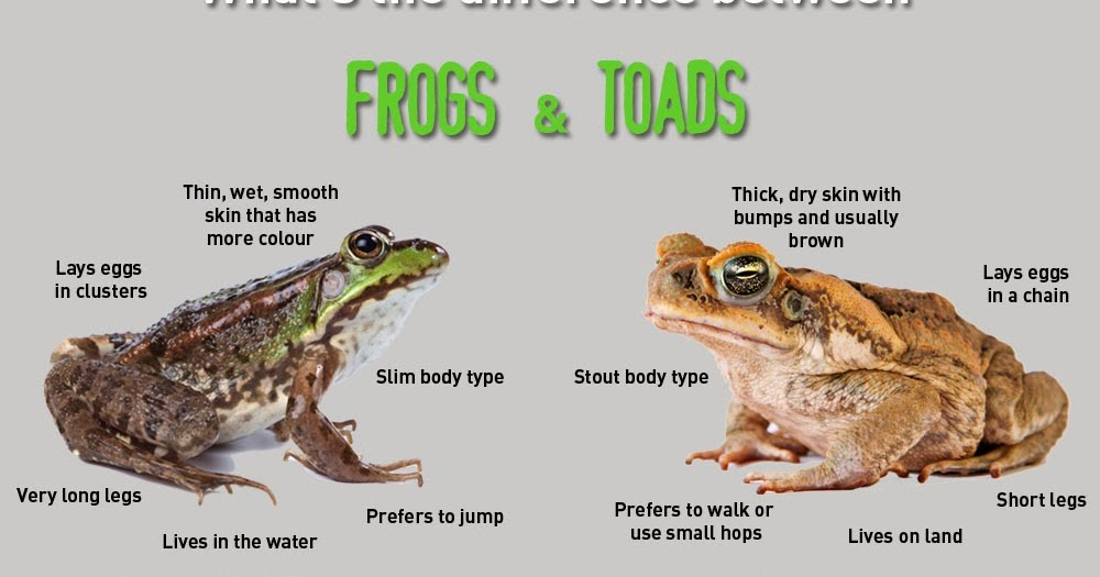 Frog hearing and communication