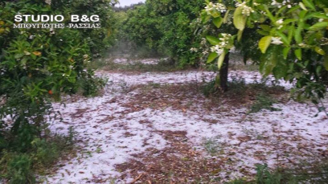Αγροτοκτηνοτροφικός Σύλλογος Ν. Αργολίδας: Αποζημίωση στο 100% της ζημιάς που έχουν υποστεί οι αγρότες από το χαλάζι