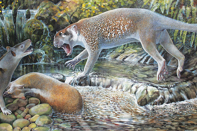 New species of extinct marsupial lion discovered in Australia